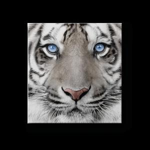 déco maison cadre tigre